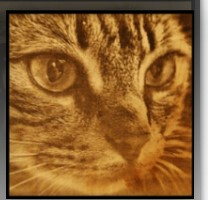 Engraved Photo - Pet Photo Gifts